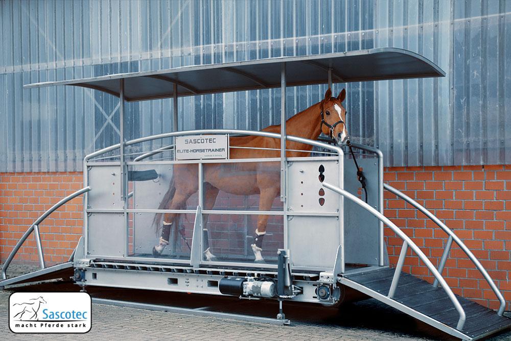 Ein Pferd im Fitnesstudio? Das Pferdelaufband macht es möglich